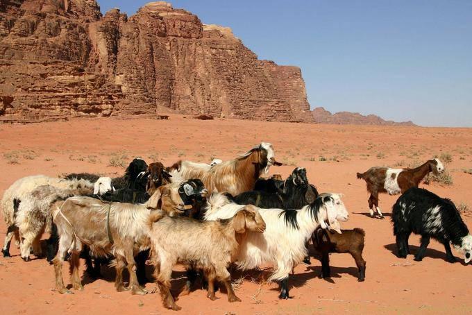 Wadi Rum 742