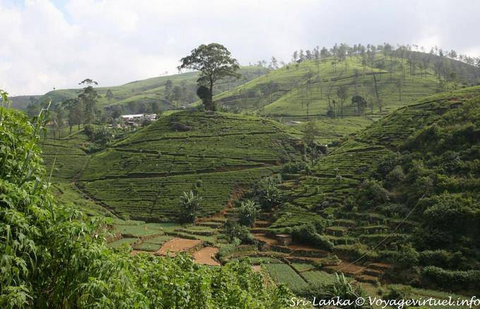 nuwara eliya dating site Ancient sites and diverse cultural traditions dating back thousands of and visit all six of sri lanka's cultural world heritage sites: nuwara eliya galle yala.