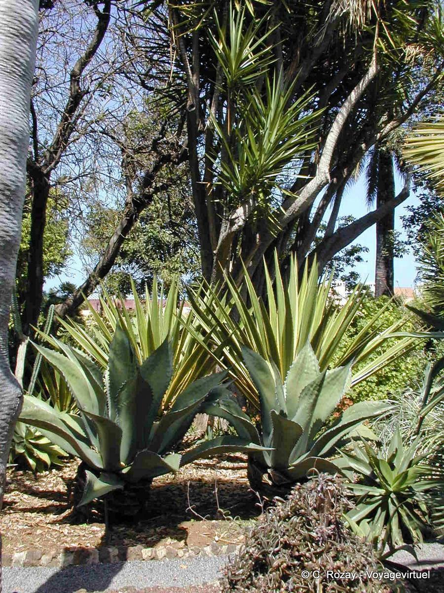 Hermoso Jardin Caleta Tenerife Colección De Jardín Diseño