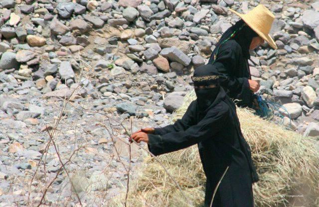 Wadi Serdoud 1484